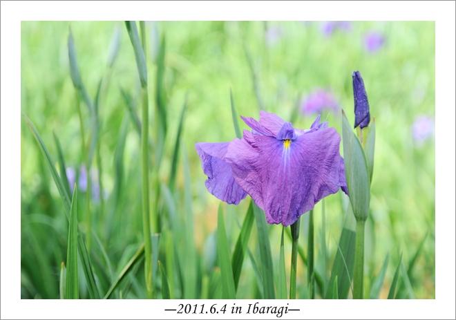 20110604-15.jpg