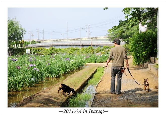 20110604-16.jpg