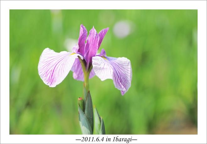 20110604-19.jpg