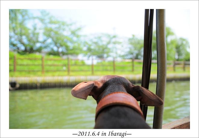 20110604-5.jpg