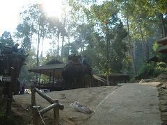 メーサー象キャンプ