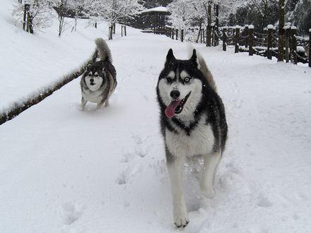 雪道を走る健太・北斗