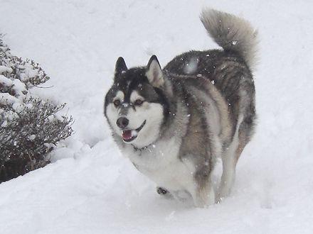 雪の中走る健太