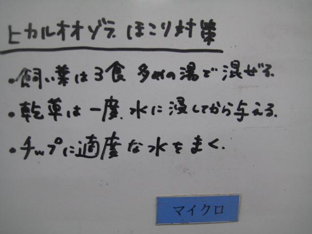 hikaru_hokori