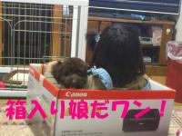 DSC_0033_convert_20110909194637.jpg