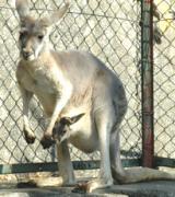 福岡市動物園で