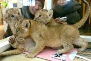 九州自然動物公園アフリカンサファリ(永田豊園長)で