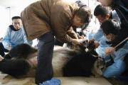四川省の成都パンダ繁殖研究基地で