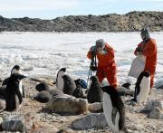 南極・ラングホブデ袋浦 同行記者撮影