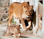 広島市安佐北区の市安佐動物公園で