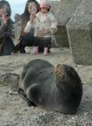 新潟県村上市の砂浜で