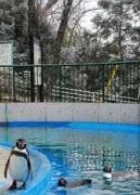 桐生市宮本町の桐生が岡動物園で