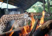 中国重慶市の野生動物園で