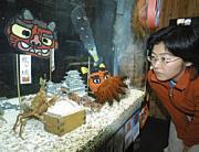 和歌山県すさみ町立エビとカニの水族館で