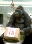 3日午後、名古屋市千種区の東山動物園で