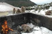 土庄町、銚子渓自然動物園「お猿の国」で