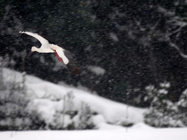 飛翔雪6P