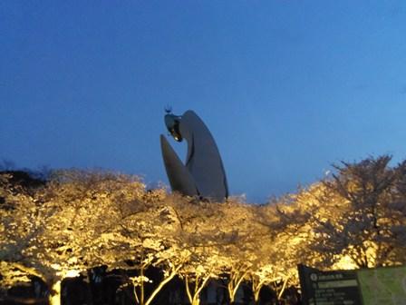夜桜その3