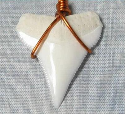 shark tooth 5mm Coco Z