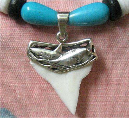 shark tooth silver Z