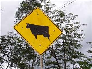 牛に注意!!