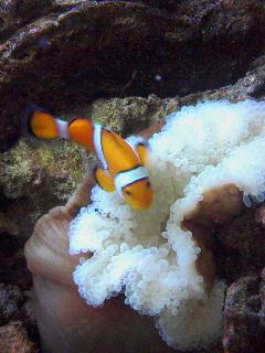 海水魚、熱帯魚飼育Q&A
