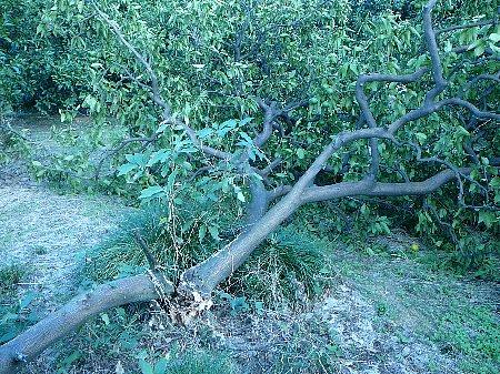 ミカン台風被害20110904