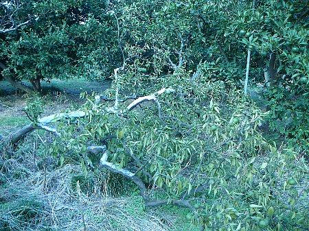 台風被害清見20110904