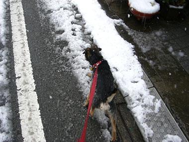 03 Feb 2008 ChipSnow blog (1)