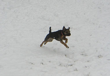03 Feb 2008 ChipSnow blog (5)