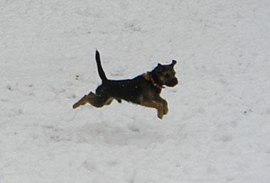 03 Feb 2008 ChipSnow blog (3)