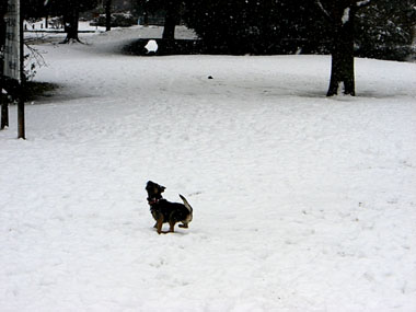 03 Feb 2008 ChipSnow blog (7)