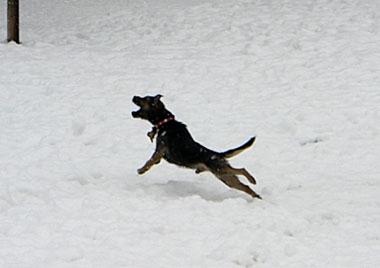 03 Feb 2008 ChipSnow blog (4)