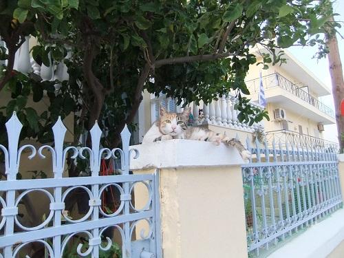 ピガディアの猫さん (1)