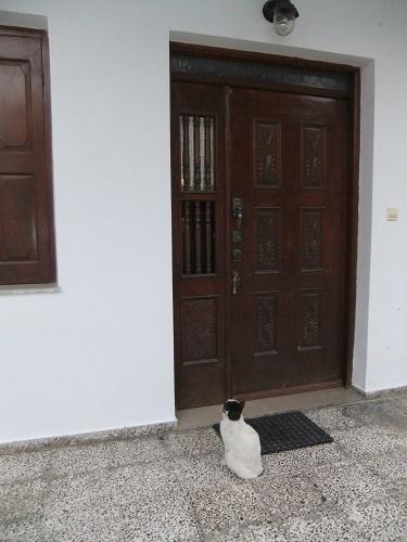 ピガディアへの道で会った猫さん