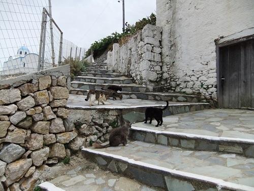 メネテスで猫給食