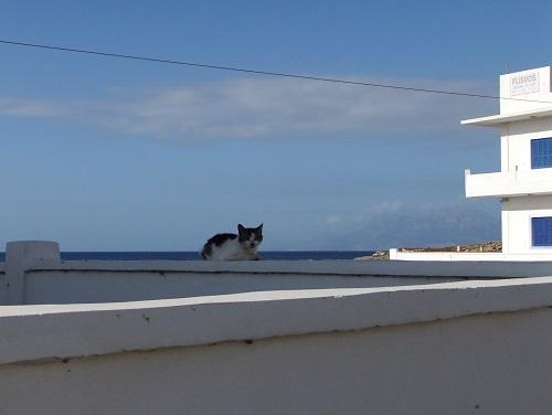 カソスの猫さん (2)