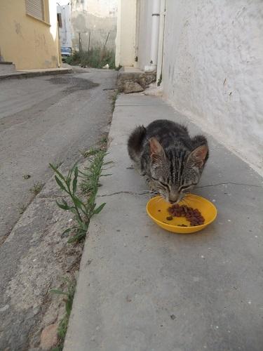イラクリオの猫さん (1)