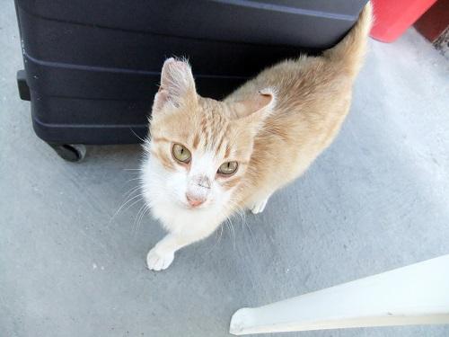 ティラシアの港の猫さん