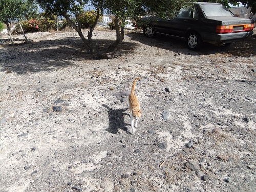 ティラシア_宿の猫さん