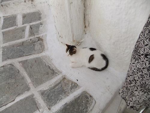 イオス_ホラの猫さん