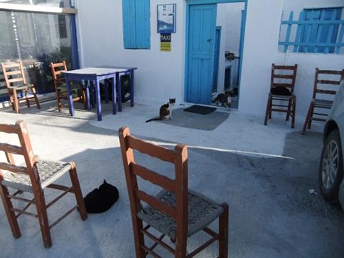 アモルゴス_カタポラの猫集会所