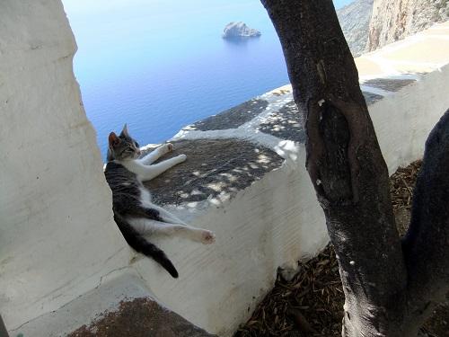 アモルゴス_ホゾヴィオティッサの猫さん (1)