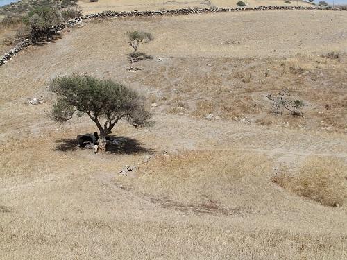 スヒヌサ_のどかな放牧地