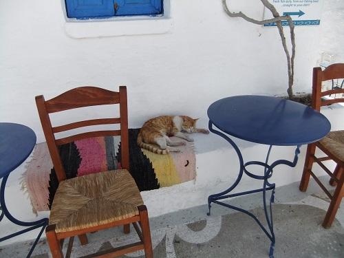 スヒヌサの猫さん