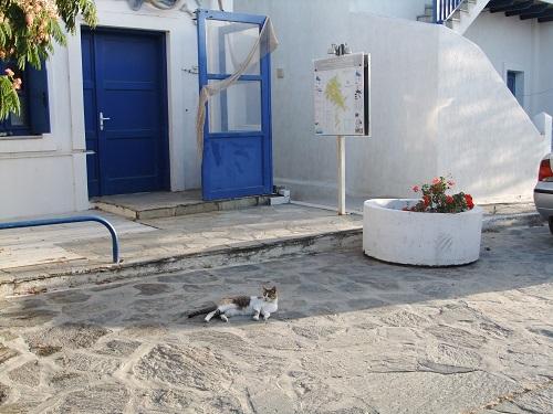 スヒヌサの猫さん (2)