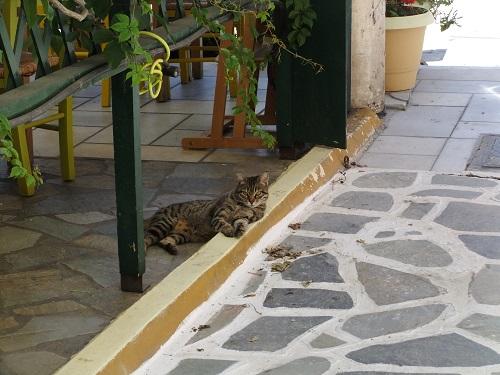 ナクソス島の猫さん