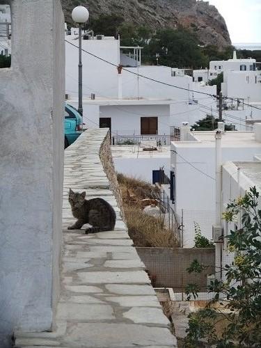 シフノス_カマレスの猫さん (2)