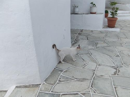 シフノス_クリソピギの猫さん