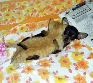 catanddog7xq.jpg